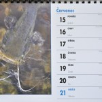 6 kalendar stolni 2013 29 600x400  desk calendar