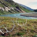 f1 kangia river 6